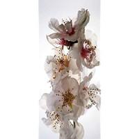 AG Design Selbstklebende Bordüre 0 14 x 5 m Papier Fototapete 90x202 cm-1 Teil Blumen Folie Colorful 90 x 202 cm