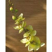 PARC Network - Kunstorchidee real Touch Creme-grün 90cm - Kunstzweig - Orchideenzweig Künstlich - Orchideen Plastik - Seiden Orchidee - Kunstblume