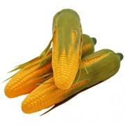 Barbariol babariol Künstliche Mais Lebensechte Simulation Fake Gemüse Mais 3Pcs Small Corn