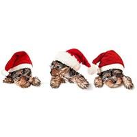 Weihnachtswandaufkleber Kühlschrankaufkleber Für Hunde Die Weihnachtsmützen Tragen Aufkleber Der Tierhandlungdekoration